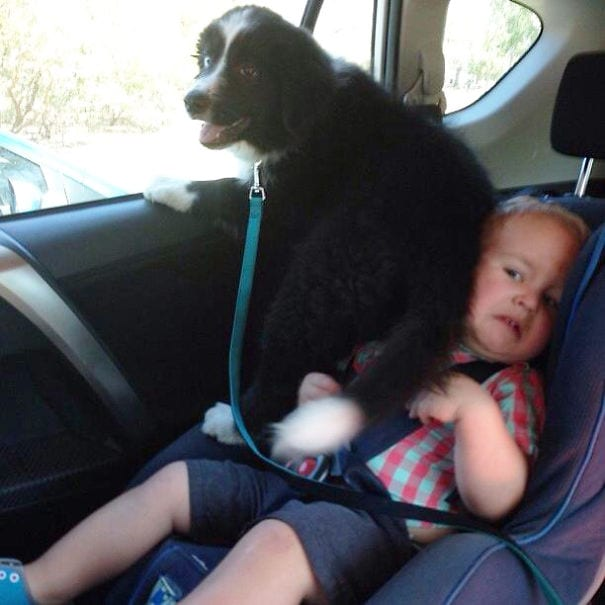 30 собак, которые абсолютно не уважают личное пространство