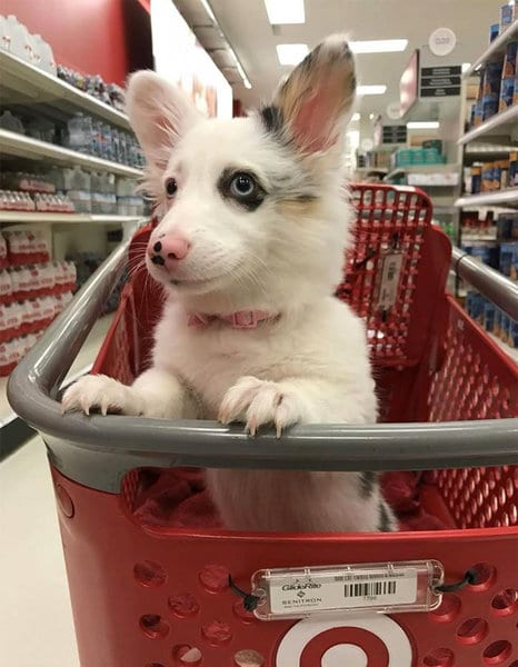 4-месячный щенок впервые в супермаркете