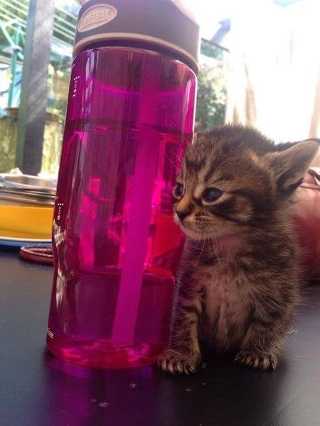 Отобранный у пьяной компании котенок оказался очень необычным
