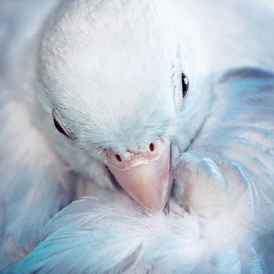 Фантастически красивая фотоистория любви 4-х попугачиков