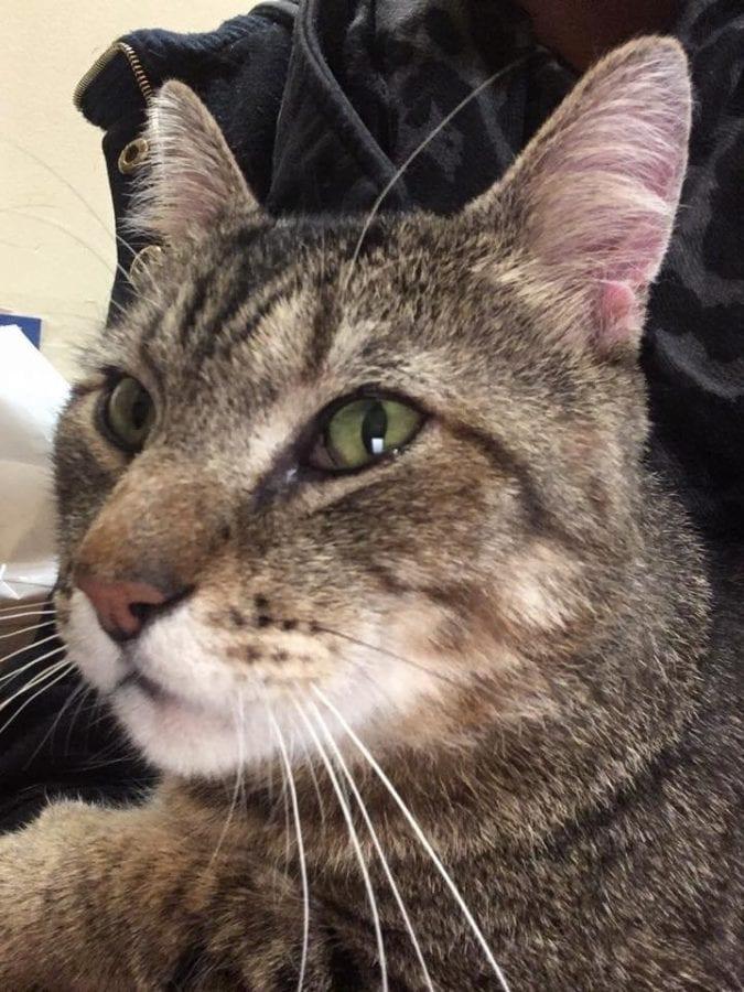 В зоомагазине кот обнял посетительницу и отказывался отпускать