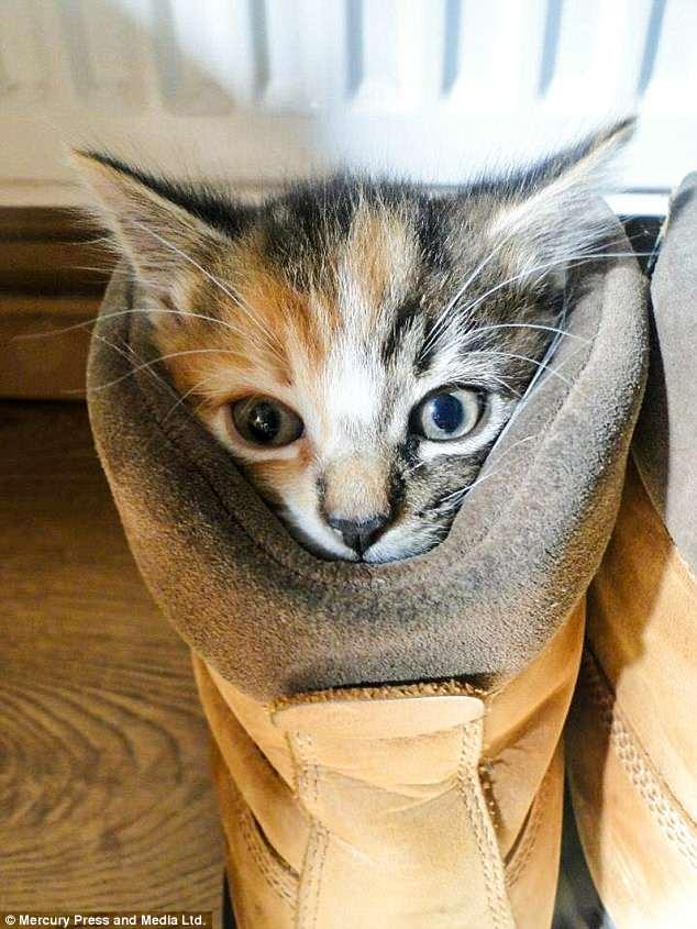 Здоровая кошка села рядом с тюльпанами, а через сутки ее пришлось усыпить