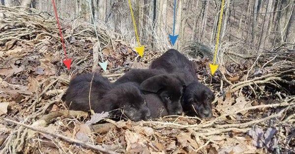 Совершая пробежку в лесу, пара случайно спасла 5 щенков