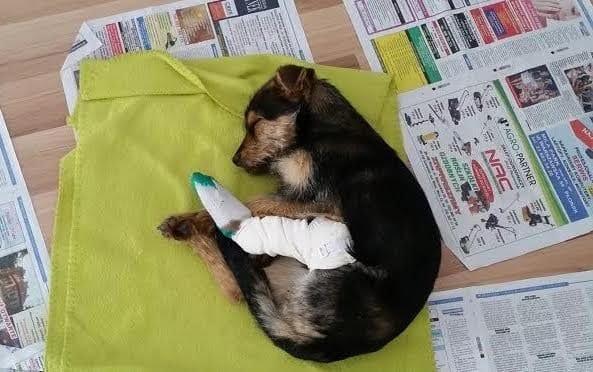 Песик со сломанными лапками две недели страдал в трубе