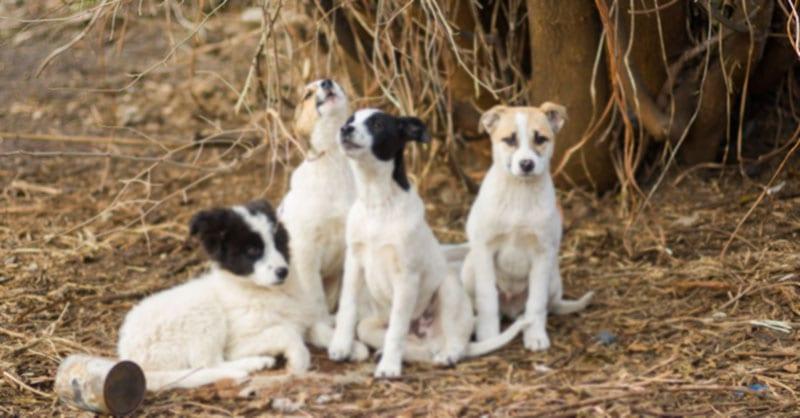 Парень нашел в лесу шевелящийся сверток, охраняемый 4-мя собаками