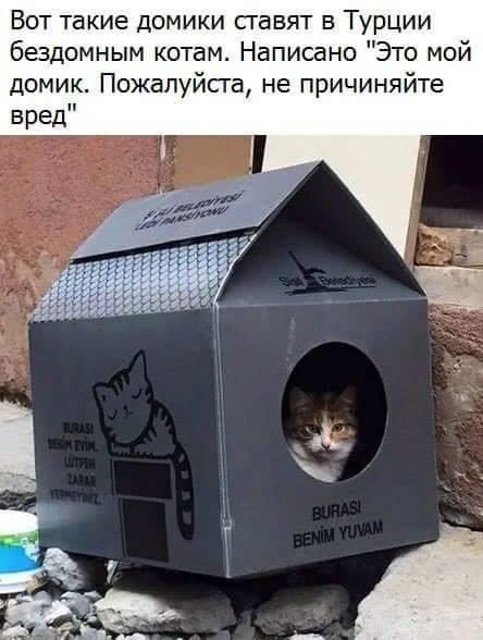 ВИДЕО: Продавец мясного магазина накормил уличного кота