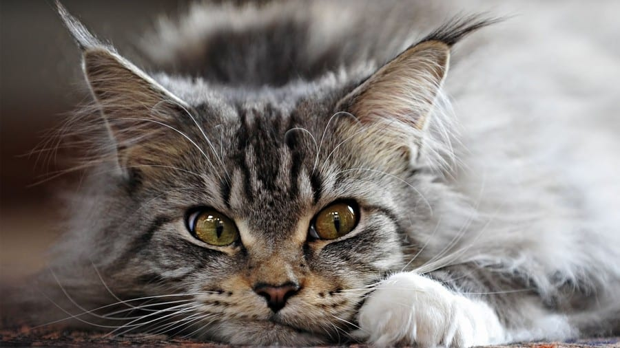 10 правил жизни человека, у которого есть кот