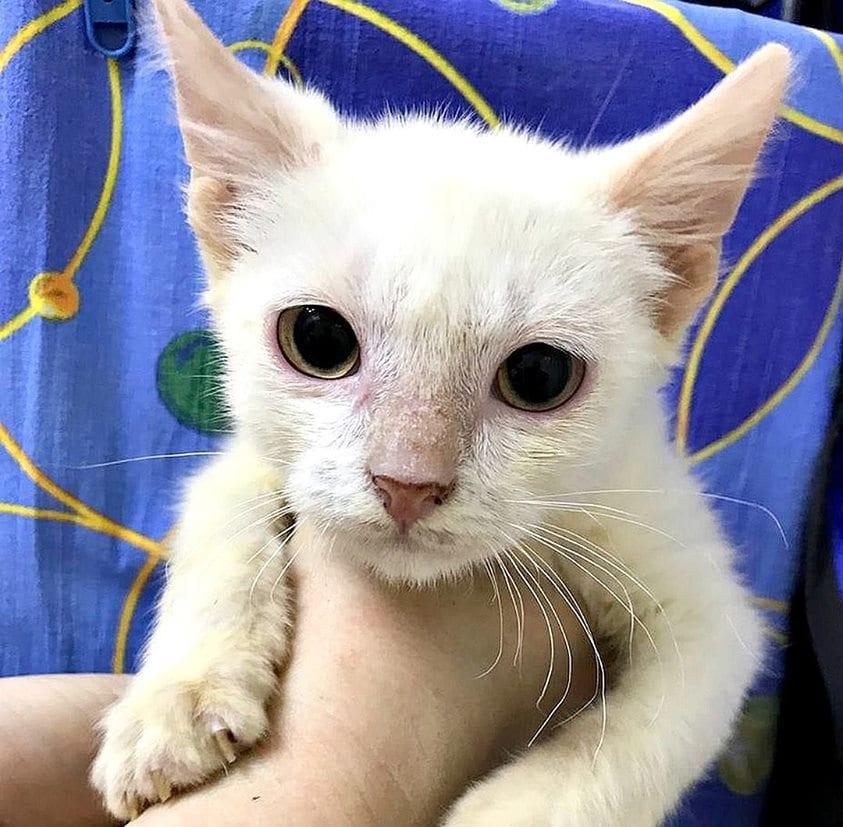 Девушка оплатила огромный долг приюта, чтобы волонтеры и дальше могли помогать бездомным животным