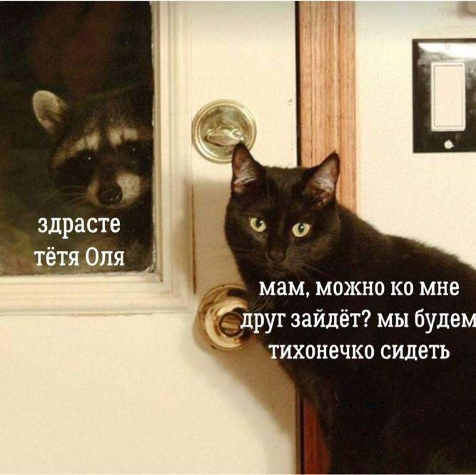 16 шедевров кото-фото-искусства