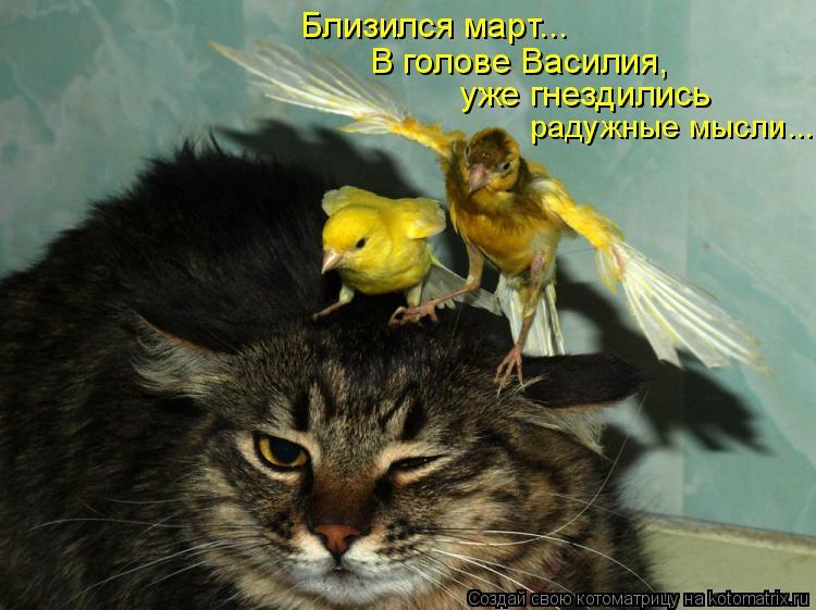 21 кот в предвкушении марта