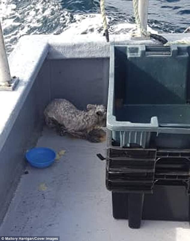 Рыбаки увидели, что в море на «грибе» дрейфует какое-то животное