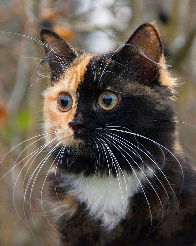 Удивительная кошка Яна живет в Минске