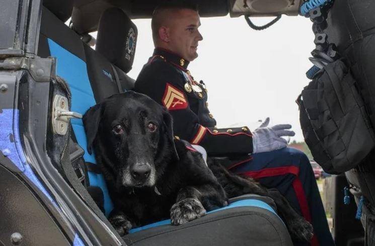 Проводы пса-героя в последний путь