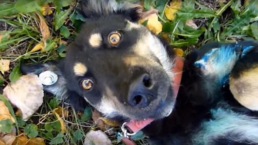 Люди спасли тень собаки от жестокого хозяина