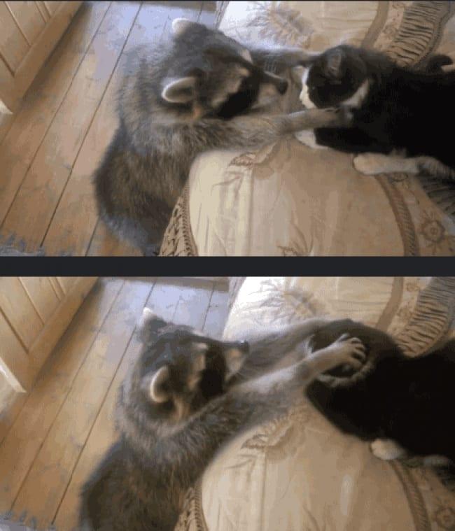 """33 животных, во взгляде которых читается: """"Не дам - моё!"""""""