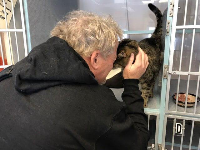 Благодаря Facebook семья нашла кота, пропавшего 2,5 года назад