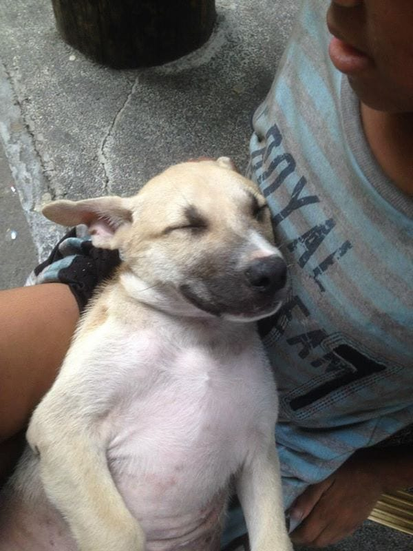 Трогательная дружба бездомного мальчика и бродячего пса