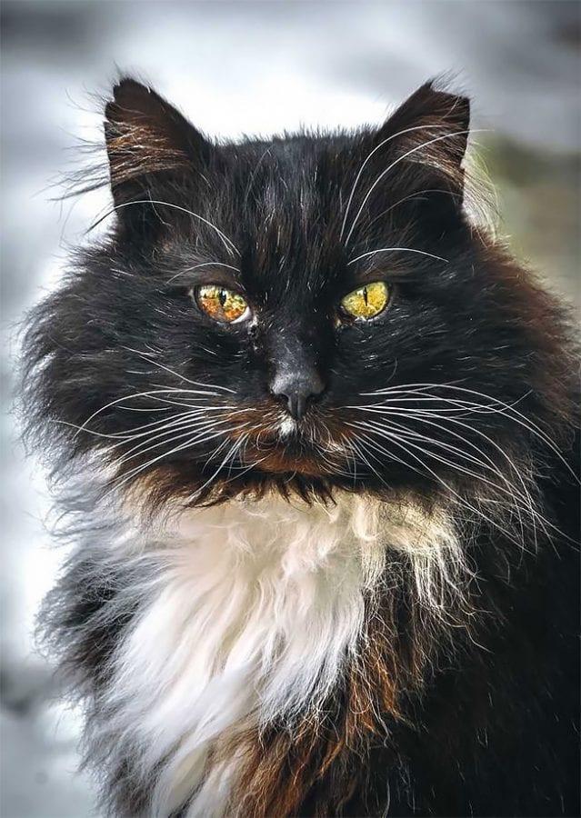 Потрясающие фото бродячих котов