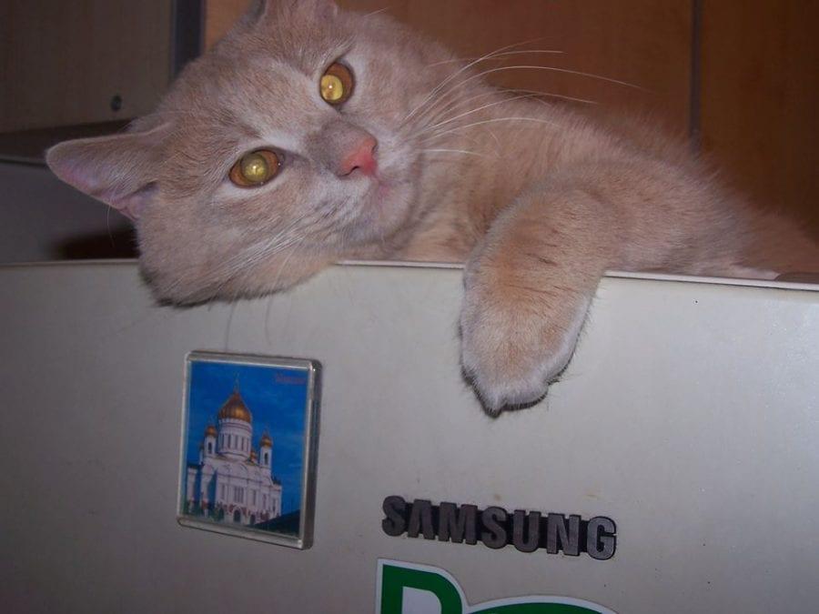 Заначка кота Тихона