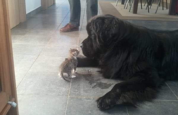 История про старого-престарого пса и его юного усатого защитника