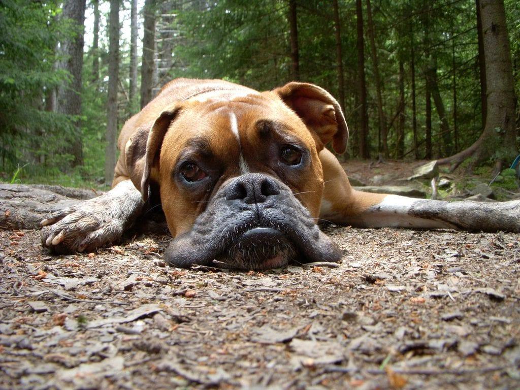 """Как """"глупый"""" пес поставил на место дрессировщика"""