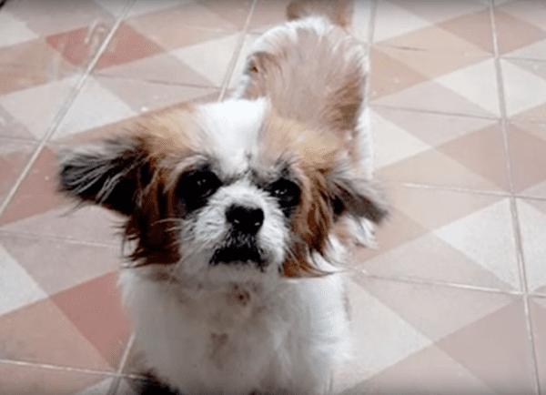 Выбрoшенная на обочину собака три дня ждала помощи