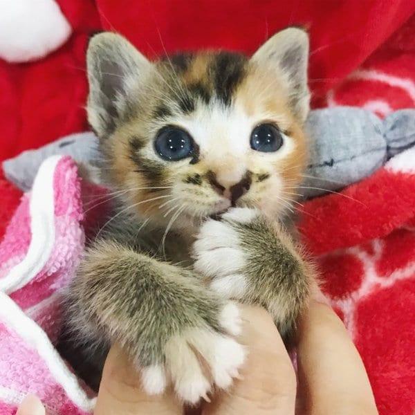 В пыли лежал котенок с вывернутой лапкой
