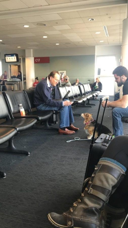 Корги с тяжелой судьбой утешила незнакомца, оплакивающего свою собаку