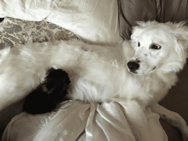 Домашняя собака на прогулке спасла погибaвшего новорожденного котенка