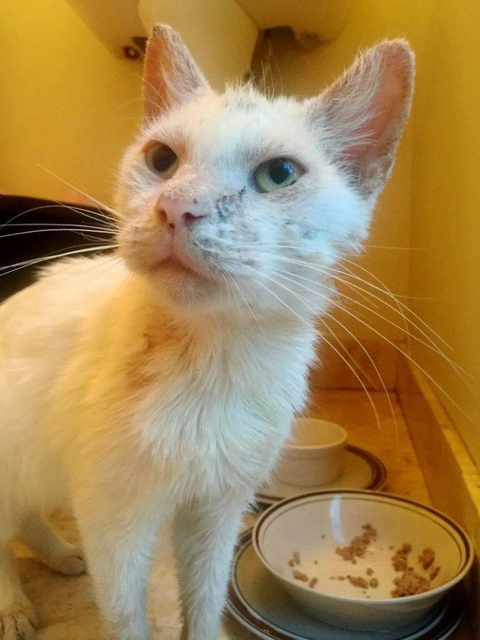 После лечения оказалось, что у «слепого» бездомного кота изумительной красоты глазки