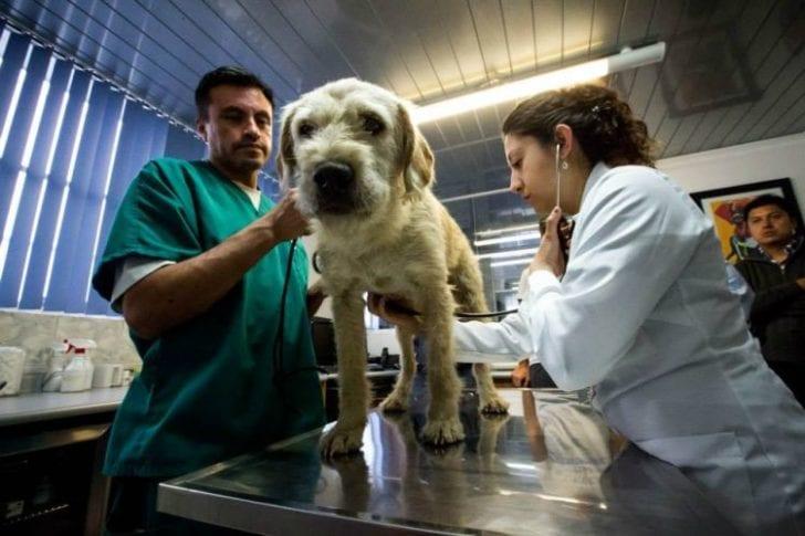 Бродячий пес шел за людьми 700 км и получил награду - дом и хозяина
