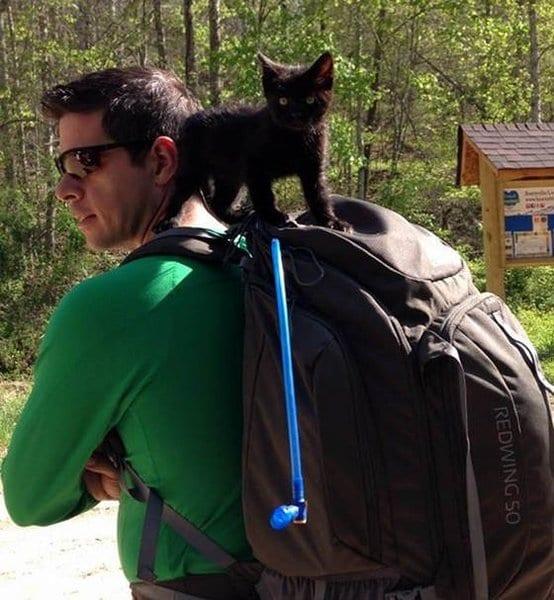 Группа альпинистов нашла в лесу котенка, а тот - любящего хозяина