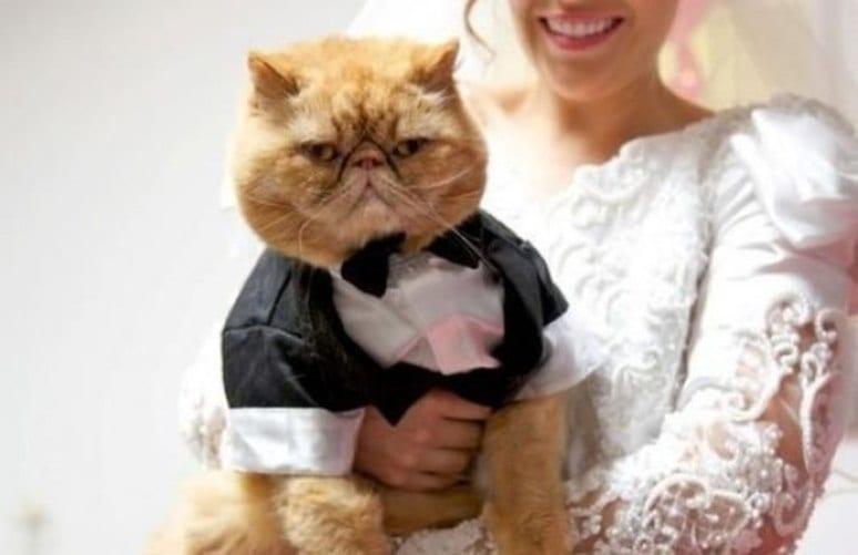41 фото котов, которых пригласили на свадьбу