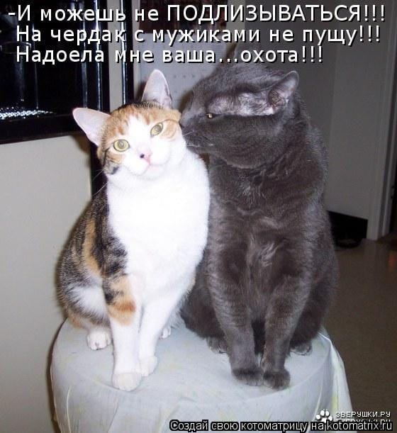 18 сцен из кошачьей семейной жизни