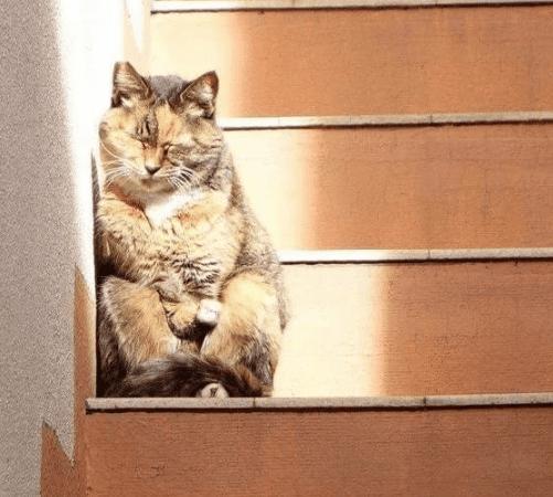 18 фотодоказательств, что животные - сама непосредственность
