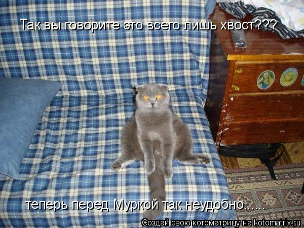 32 фото животных на грани фола с забавными комментариями