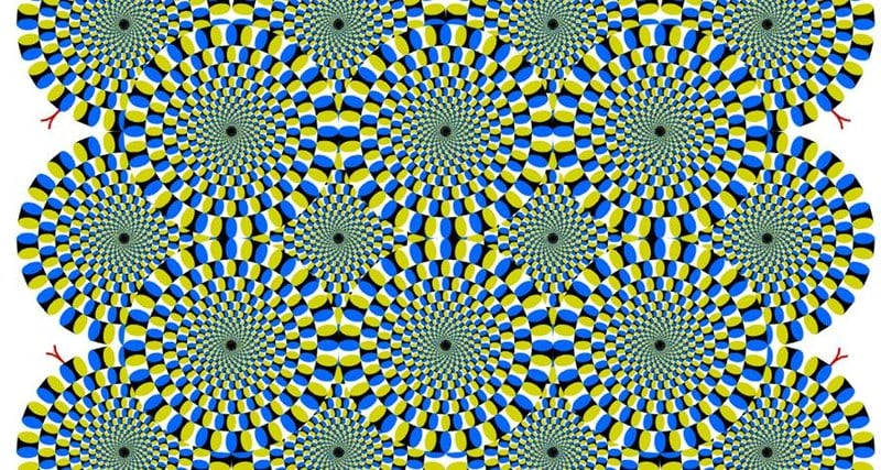 ВИДЕО: Реакция кошки на оптическую иллюзию
