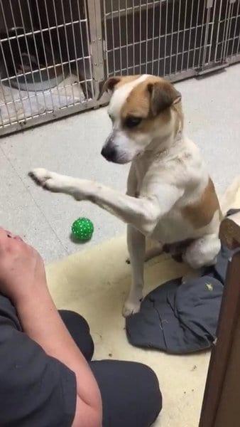 Прикованный цепью к дереву пес отказывался общаться с людьми
