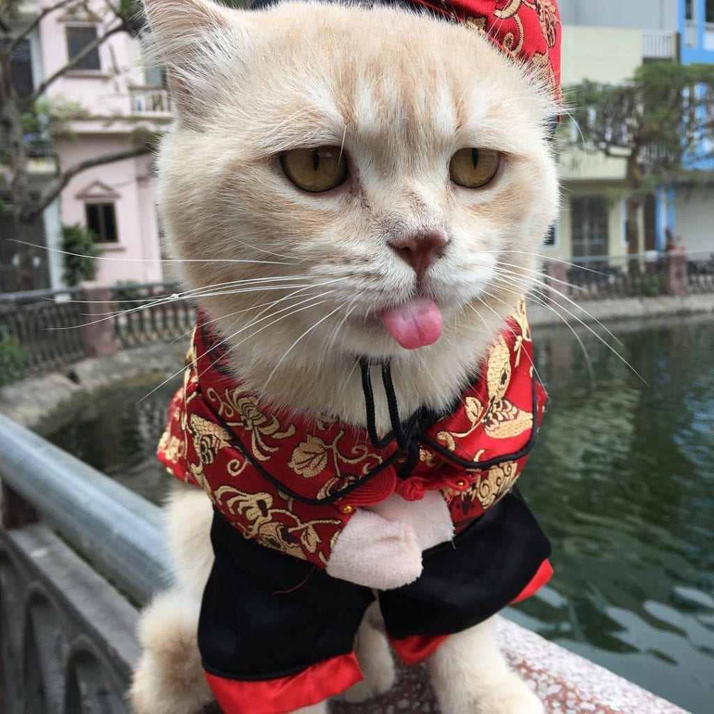 Кот по кличке Собака – знаменитый продавец рыбы во Вьетнаме