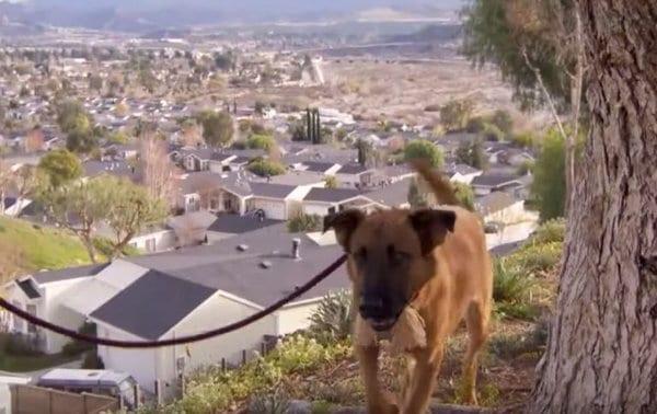 Зузу, дважды преданная своими хозяевами, нашла новый дом