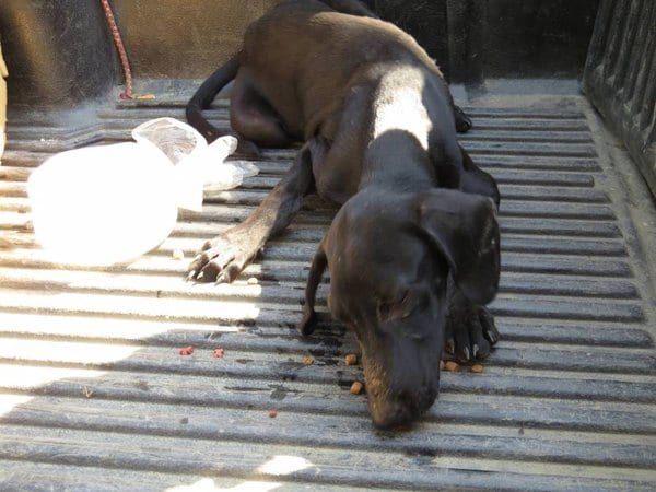 Бродячая собака рухнула на землю и заплакaла, поняв, что люди пришли ей помочь