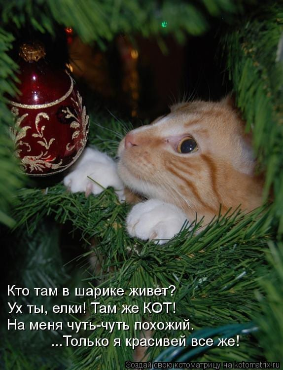 30 фото о том, как коты готовятся к новому году