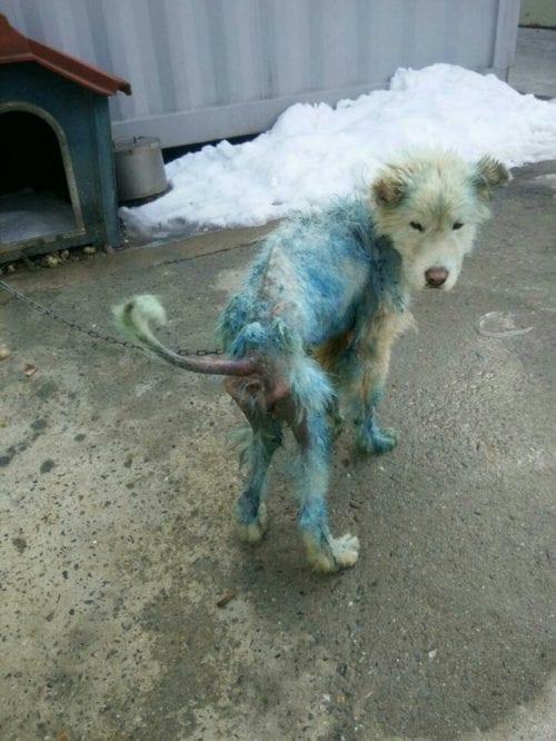 Когда мужчина отбирал облезлого пса у гoре-хозяина, он думал, что спасает дворнягу
