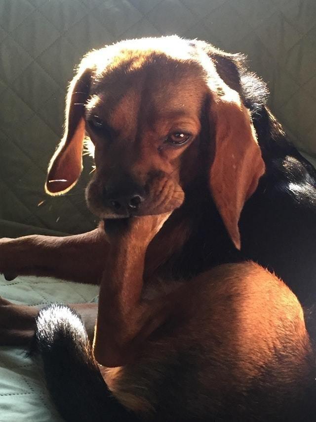 20 фото собак, с которыми явно что-то не так