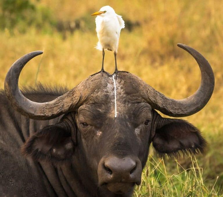 19 финалистов конкурса смешных фото животных