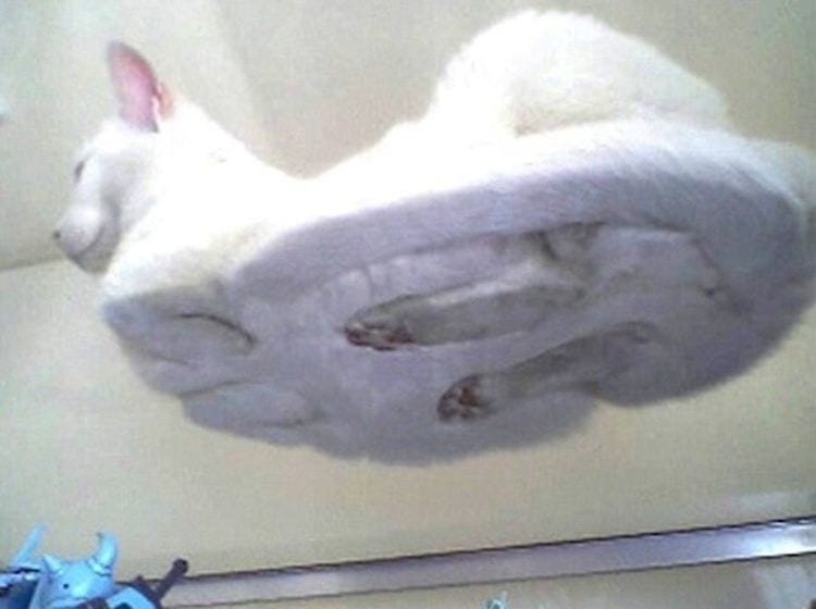 23 доказательства, что коты - пришельцы из космоса