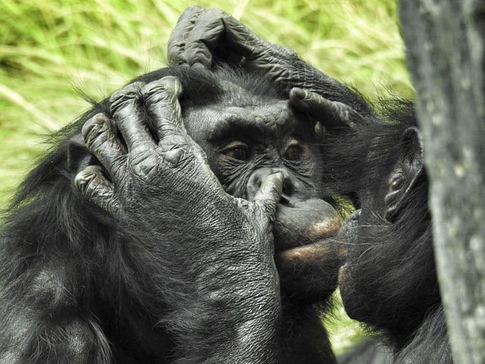 16 фактов о животных, которые мало кто знает