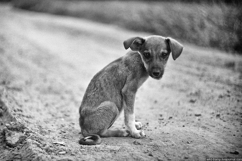 Вот то же самое переживают бездомные животные - видео, которое нельзя смотреть равнодушно