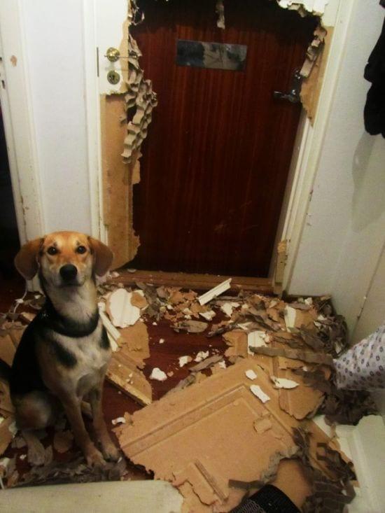 15 собак, которые чувствуют себя очень виноватыми