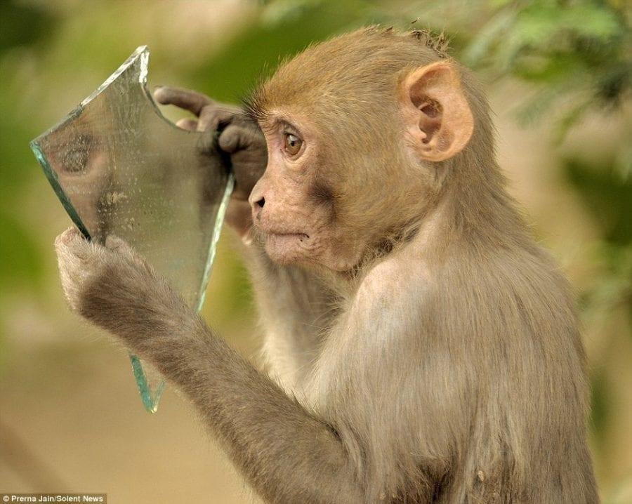 """Басня Крылова """"Зеркало и обезьяна"""" ожила в фото"""
